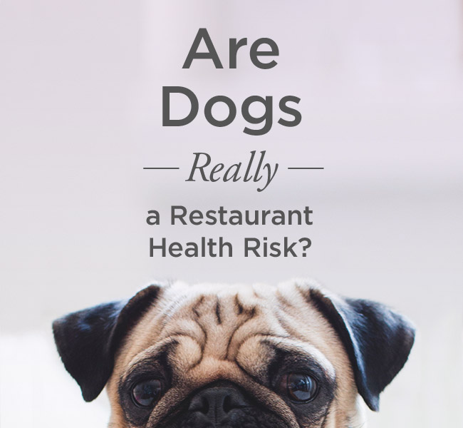 Are Dogs Really a Restaurant Health Risk?