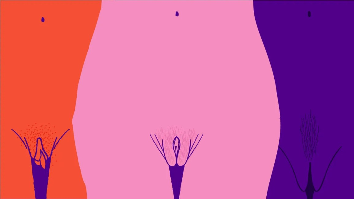 What does the female vulva look like
