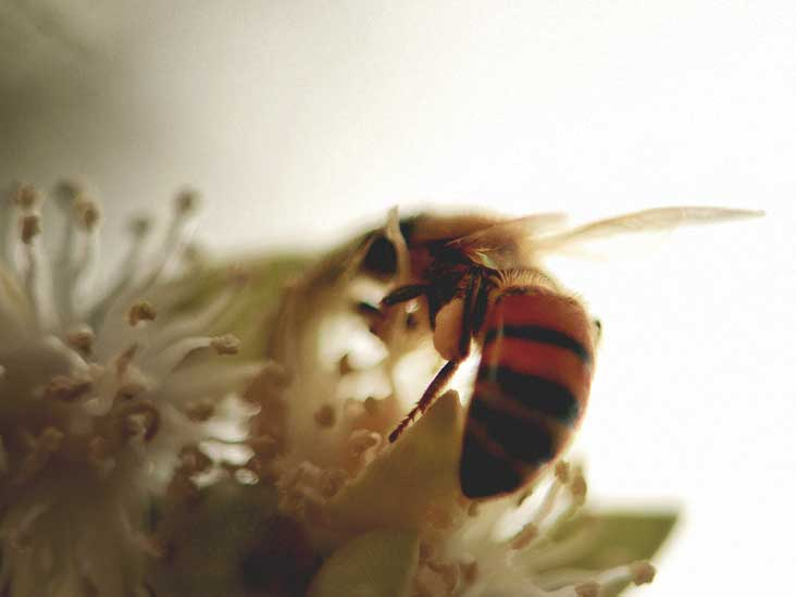 Bee Venom: Uses, Benefits, and Side Effects