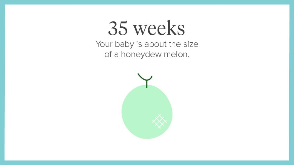 medium resolution of 4 week pregnant belly diagram