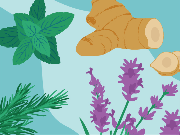 Migraine Herbal Remedies: Peppermint, Ginger, and More