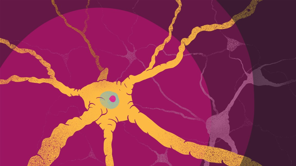 How Multiple Sclerosis Affects the Brain: White Matter and Gray Matter