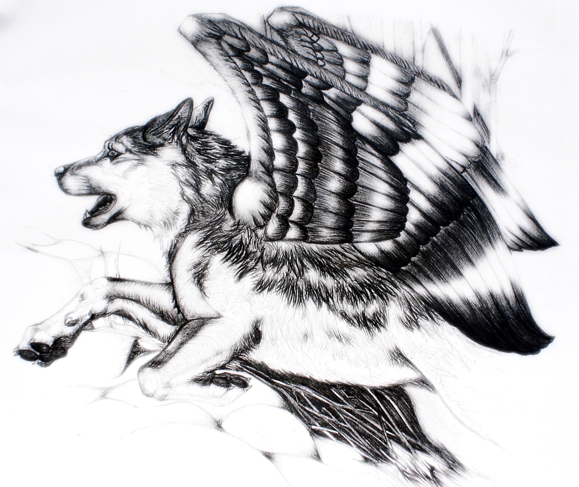 On Wolf S Wings By Palewolf On Deviantart