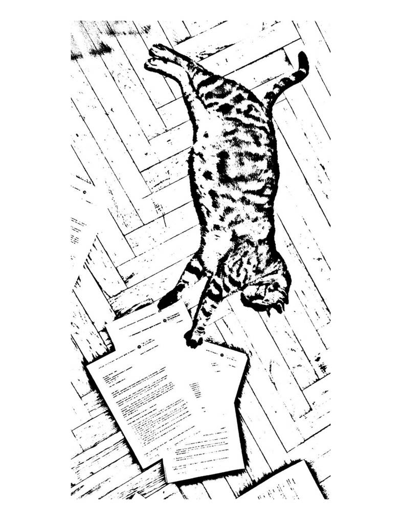Cat Scan by PDFDocumentScanner on DeviantArt