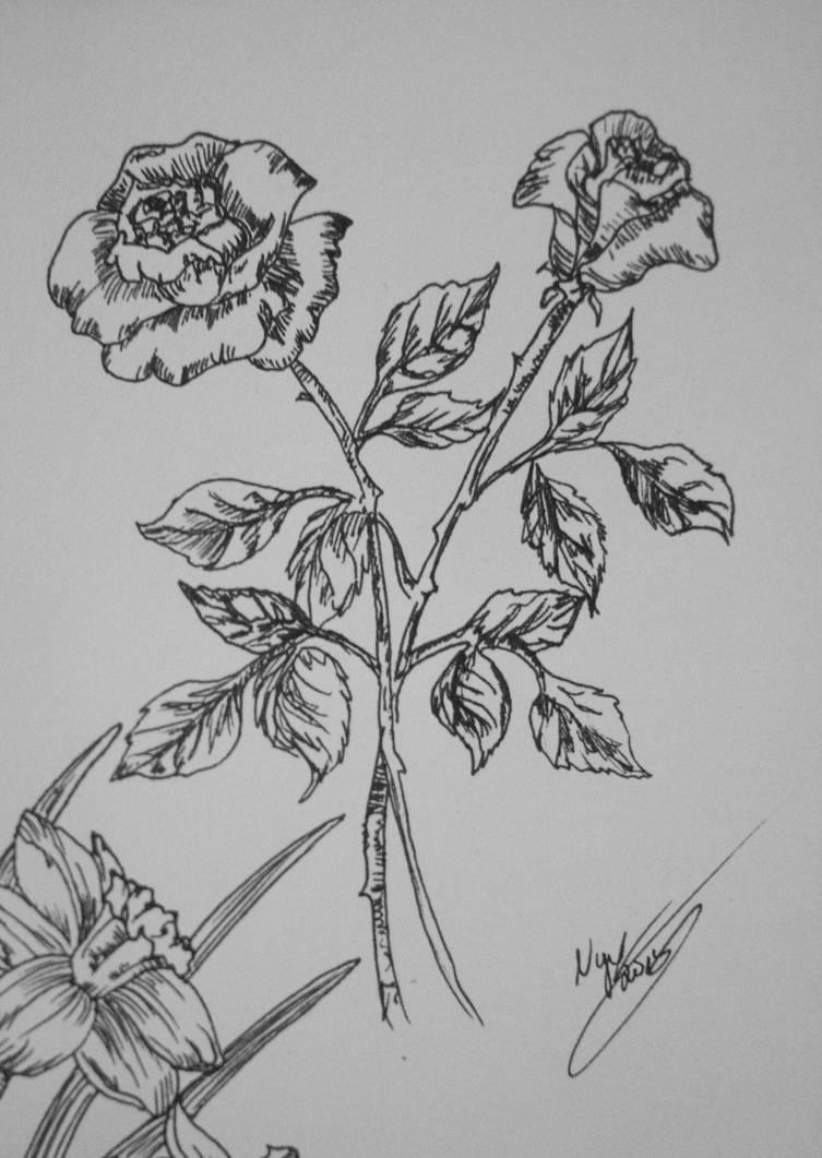 flower study part V by nyxvox on DeviantArt
