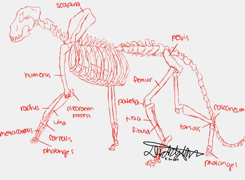 snow leopard anatomy diagram one light two switch wiring take by shadowthewingedwolff on deviantart
