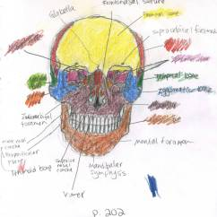 Axial Skeleton Skull Diagram Guitar Amp Wiring Front View By Mismatching Socks On Deviantart