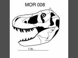 Ceratosaurus nasicorni by PaleoJoe on DeviantArt