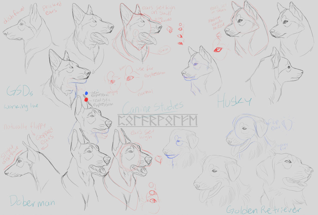 Canine Studies [Part 1] by Polarwolfe on DeviantArt