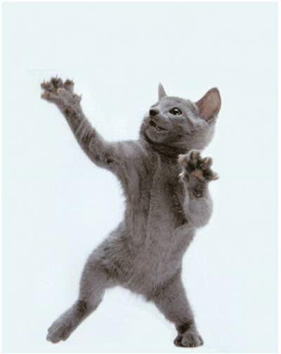 8tracks radio kitty cat
