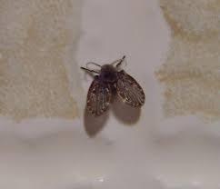 小飛蟲好討厭,就能讓小飛蟲永遠消失在你家!! LIFE生活網