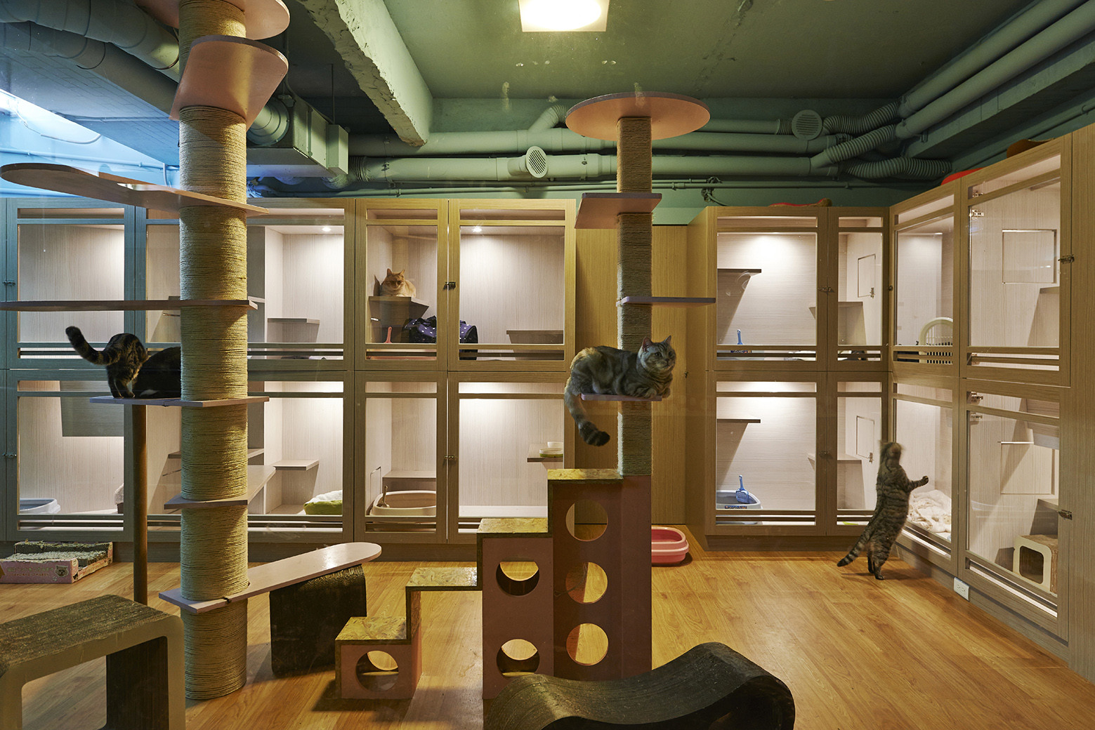 Gallery of Petaholic Hotel / sms design - 6