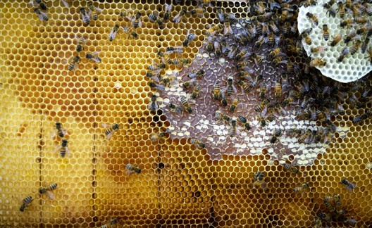 Image from<a href='http://www.archdaily.com/796769/neri-oxman-plus-mediated-matter-create-synthetic-apiaries-to-combat-honeybee-colony-loss'>Neri Oxman and the Mediated Matter group's Synthetic Apiary project</a>. Image Courtesy of The Mediated Matter Group
