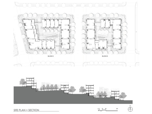Site Plan + Section