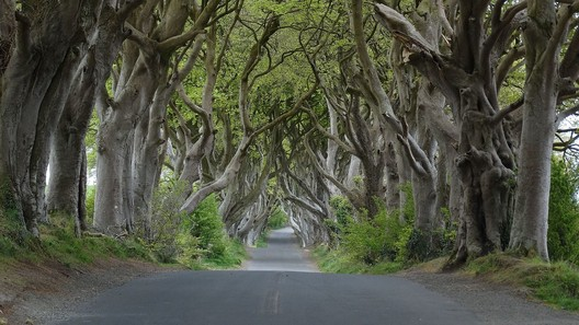 The Dark Hedges: King's Road. Image © <a href='http://www.geograph.ie/photo/5221846'>Geograph user Colin Park</a> licensed under <a href='http://https://creativecommons.org/licenses/by-sa/2.0/deed.en'>CC BY-SA 2.0</a>