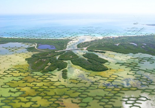"""""""CALTROPe""""–modular mangrove forests may help reduce agricultural land loss due to rising sea levels and erosion."""
