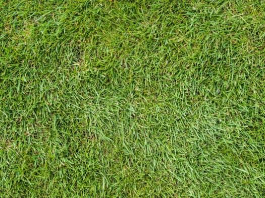 Grass 01. Image © <a href='https://www.flickr.com/photos/wwarby/14866392570/in/photolist-oDG9zh-p9vRmR-86zj39-HVfP1p-qCKRrG-ayKgb4-89fJ8b-o3zaUw-tBWQzM-sinuVf-hNJPYx-U4MGSm-oB1WoQ-bkwcy2-9wWhLG-ewDJLg-rjxiGF-6hDeBq-nq4XH5-d8pasq-ei9KCb-aMDSBi-dVWKBN-dVrJ4x-kG7rt5-hNKf1S-243uAjf-27FMcRG-avGCoh-8Kp1f6-5bxXqY-9ETeAC-PMtDTd-e2yUYk-pfX5gw-oQkUYr-A268JE-rz6pn4-9s9Gkg-fQyY7k-iaYb6e-29nvLm5-edtjVs-nhdkc1-mxGCex-bPhsS2-a7MRtV-a6WFHK-akS1oi-dRNWKB'>Flickr user William Warby</a> licensed under <a href='https://creativecommons.org/licenses/by/2.0/'>CC BY 2.0</a>