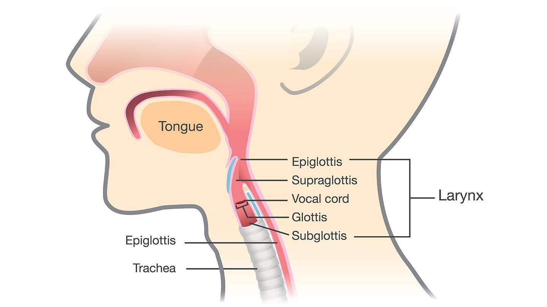 artificial voice box implant helps cancer patient speak everyday voice box diagram [ 1440 x 810 Pixel ]