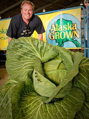 https://i0.wp.com/images.agoramedia.com/everydayhealth/gcms/pg-06-largest-cabbage-giant-vegetables-full.jpg