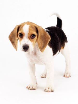 Image Result For Best Allergy Free Dogs