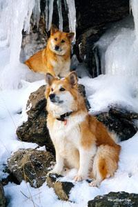 Dog Breeds   American Dog Blog   Page 7