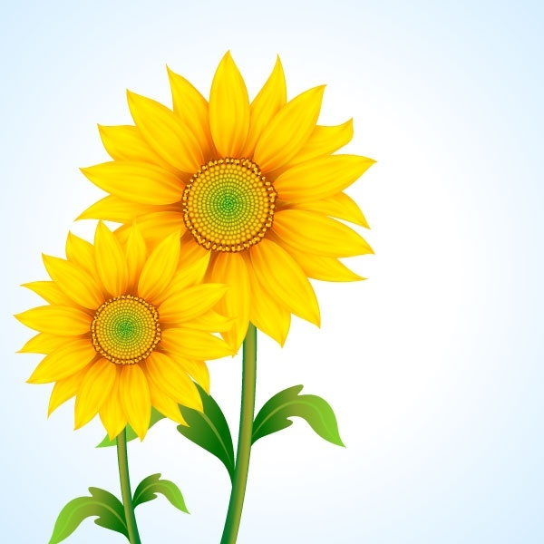 Sunflower Free Vector Download 243 Free Vector For