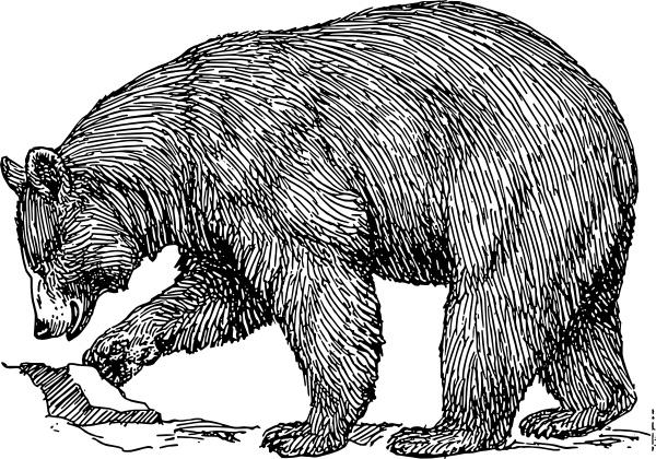 black bear clip art