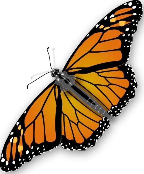 butterfly clip art free vector