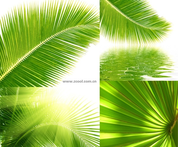 Artificial Coconut Palm Trees