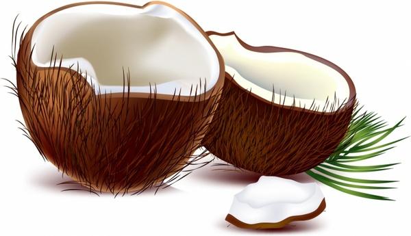 coconut free vector 288