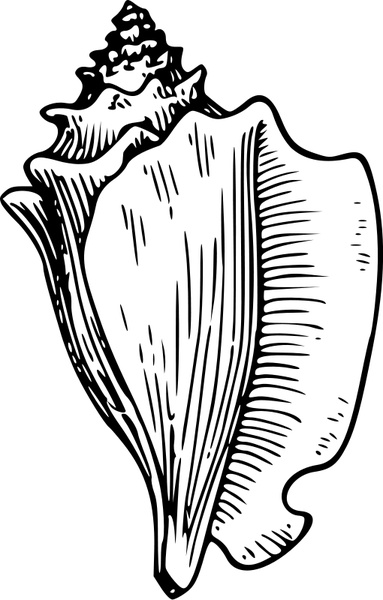 Conch Free vector in Open office drawing svg ( .svg