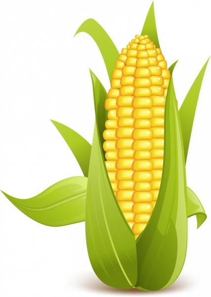 corn free vector 123