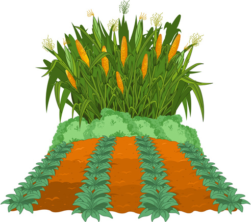 Corn Free Vector Download 123 Free Vector For Commercial