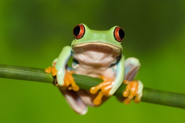 cute frog 01 hd pictures