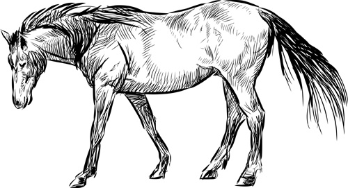 Horse free vector download (756 Free vector) for