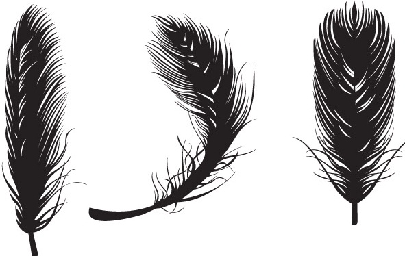 feather vectors free vector
