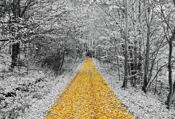 gold footpath
