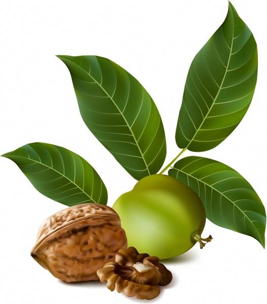 Image result for walnut free image