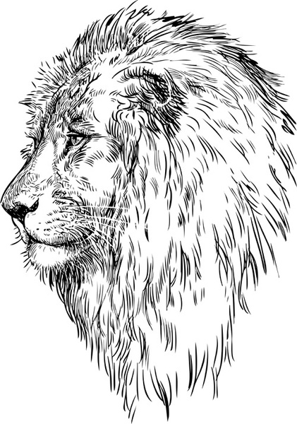Hand Drawing Lion Vector Free Vector In Adobe Illustrator Ai Ai Vector Illustration Graphic Art Design Format Format For Free Download 219 65kb