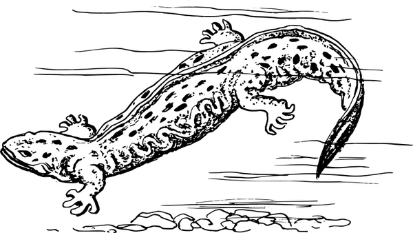 Hellbender Free vector in Open office drawing svg ( .svg