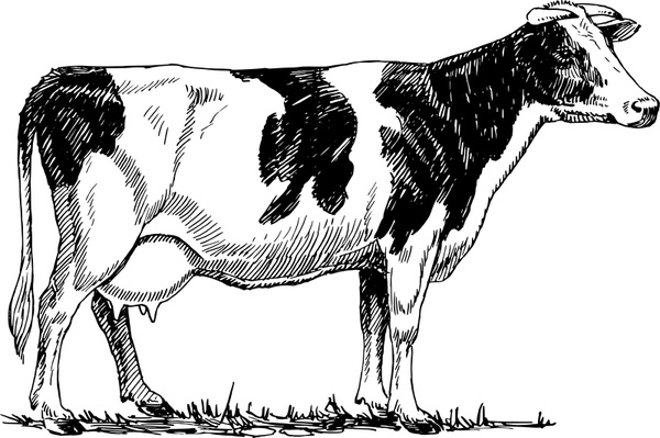 Holstein cow Free vector in Open office drawing svg ( .svg