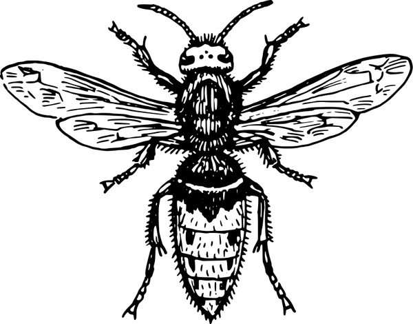 Hornet Free vector in Open office drawing svg ( .svg