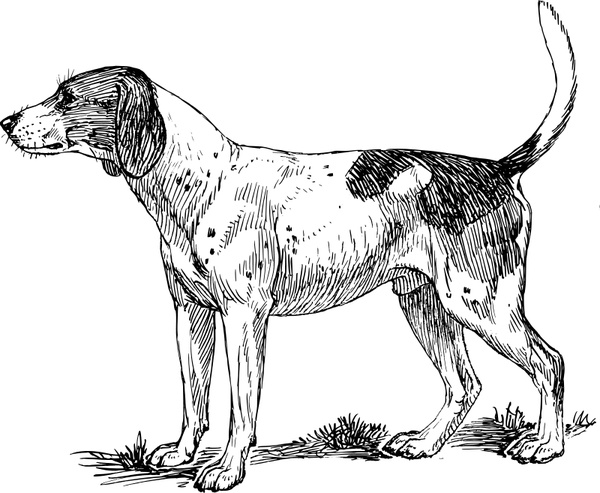 Hound Free vector in Open office drawing svg ( .svg