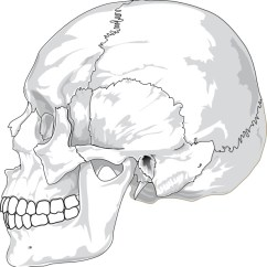 Blank Ear Diagram To Label Hall Effect Sensor Human Skull Side View Clip Art Free Vector In Open Office Drawing Svg ( .svg ) ...