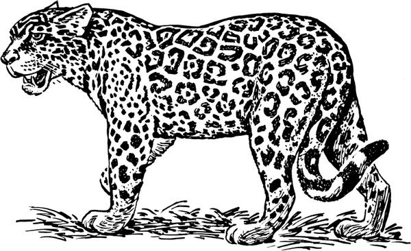 Jaguar Free vector in Open office drawing svg ( .svg
