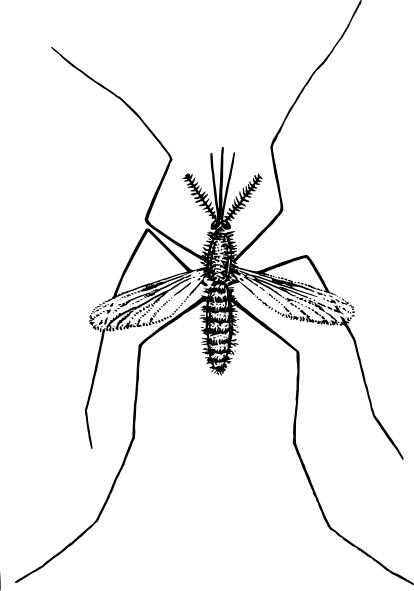mosquito clip art free vector