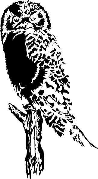 Owl On Branch clip art Free vector in Open office drawing