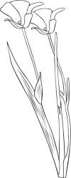Plant Flower Outline clip art Free vector in Open office drawing svg svg vector illustration graphic art design format format for free download 113 94KB