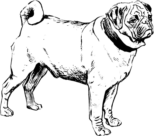 Pug Free vector in Open office drawing svg ( .svg ) vector
