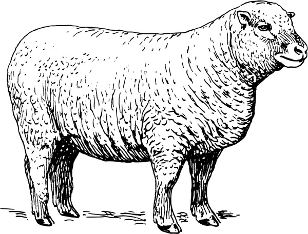 Sheep Free vector in Open office drawing svg ( .svg